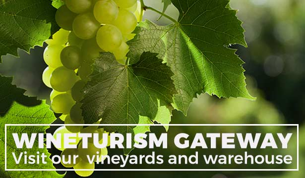 Winetourism - Visit Bodega Santa Margarita