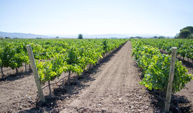 Viñedos Bodegas Santa Margarita - Castilla La Mancha
